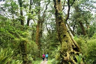 ミルフォードの原生林を歩く