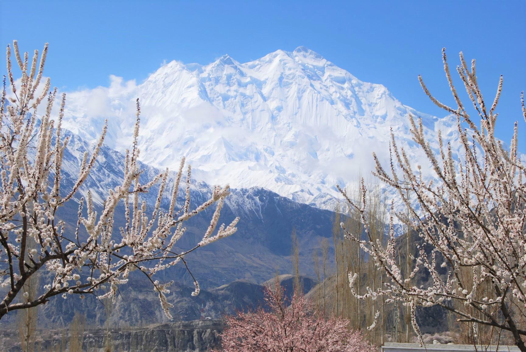杏と桃の花咲くフンザからのラカポシ(7,788m)