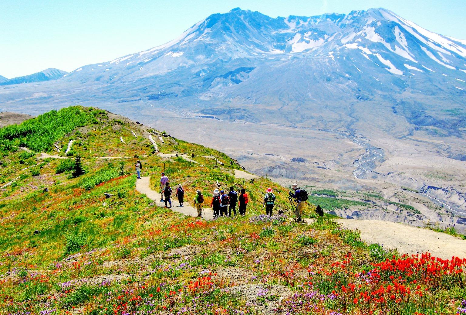 咲き乱れる高山植物とセントへレンズ山