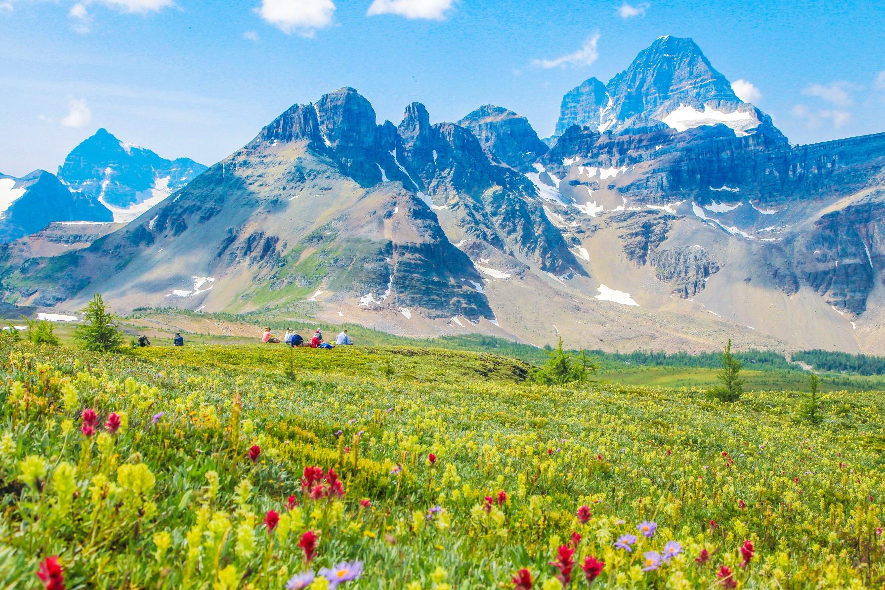 インディアン・ペイントブラシの花が咲くアシニボイン・メドウにて(7月中旬)