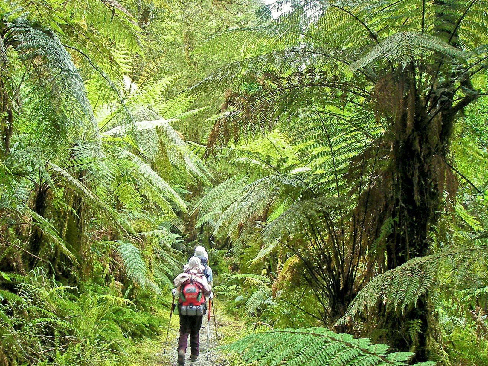 シダやコケが生い茂る緑豊かな森を歩く