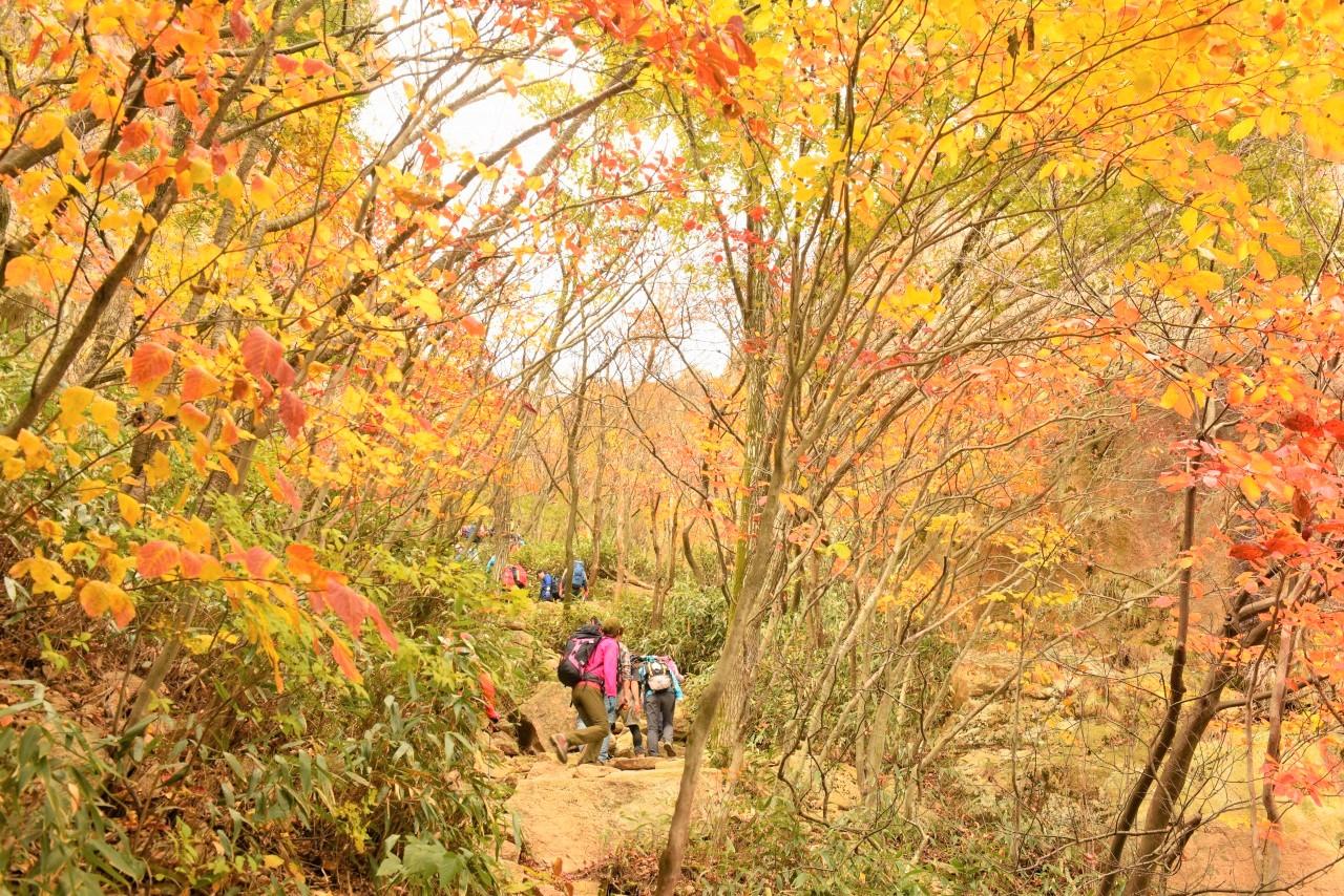 この時期は黄葉のべストシーズン(韓国)