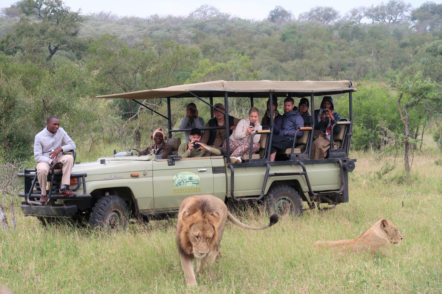 ライオン(南アフリカ)