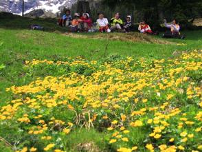 山麓では、花畑が咲き誇る季節を迎える