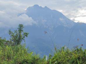 登山口への移動中に眺めたキナバル山