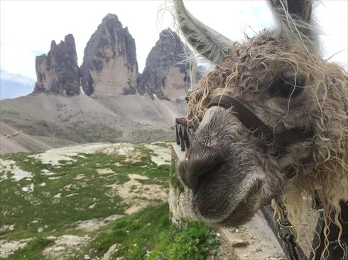 7月5日出発 「絶景の山小屋泊りで巡るドロミテ・アルプス名峰展望ハイキング10日間」