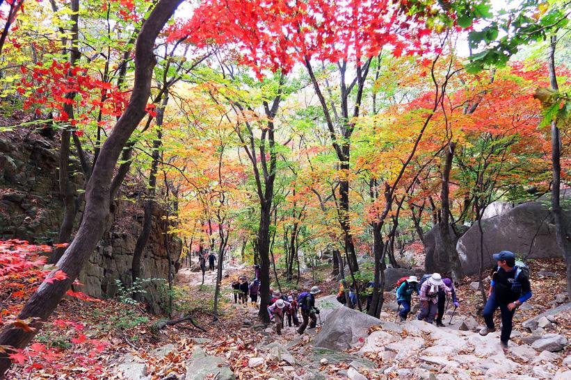 紅葉に彩られた溪谷