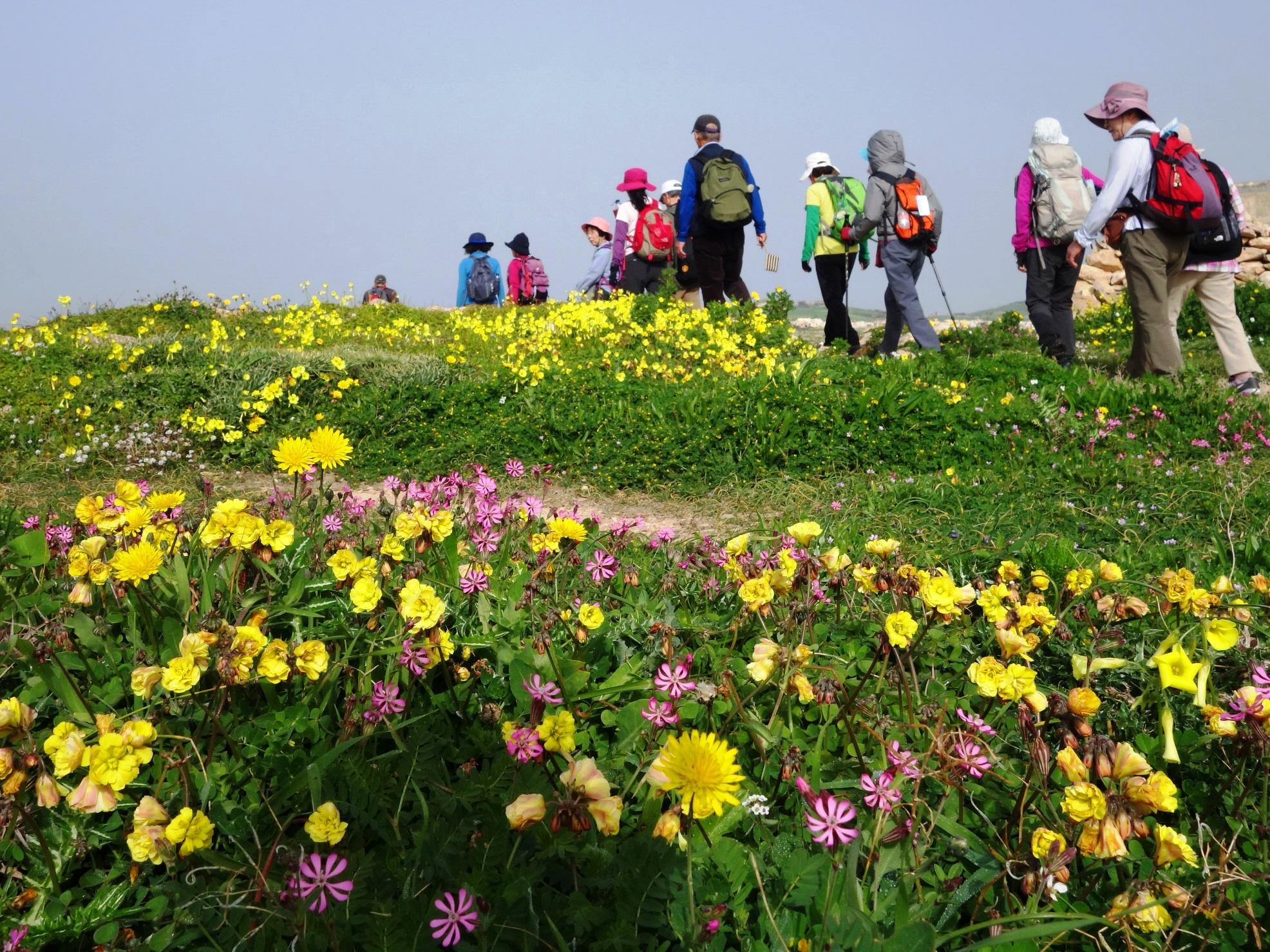 花咲くトレイルをハイキング