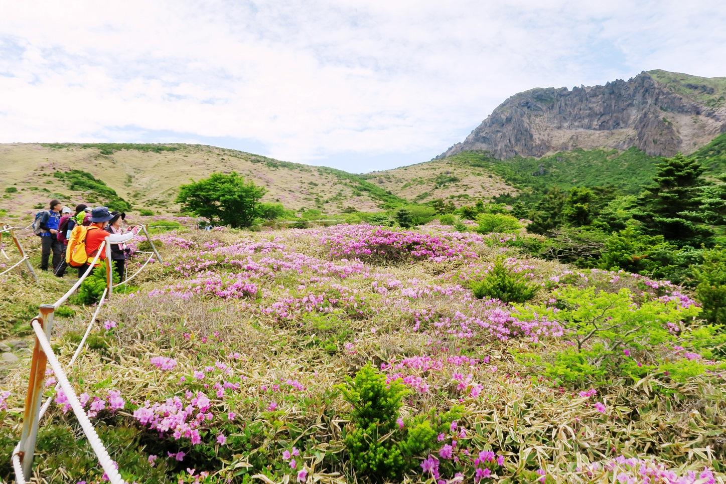 6月5日出発「韓国最高峰・漢拏山登頂とツツジ咲く西壁展望ハイキング 4日間」