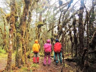 苔むした森を見上げる