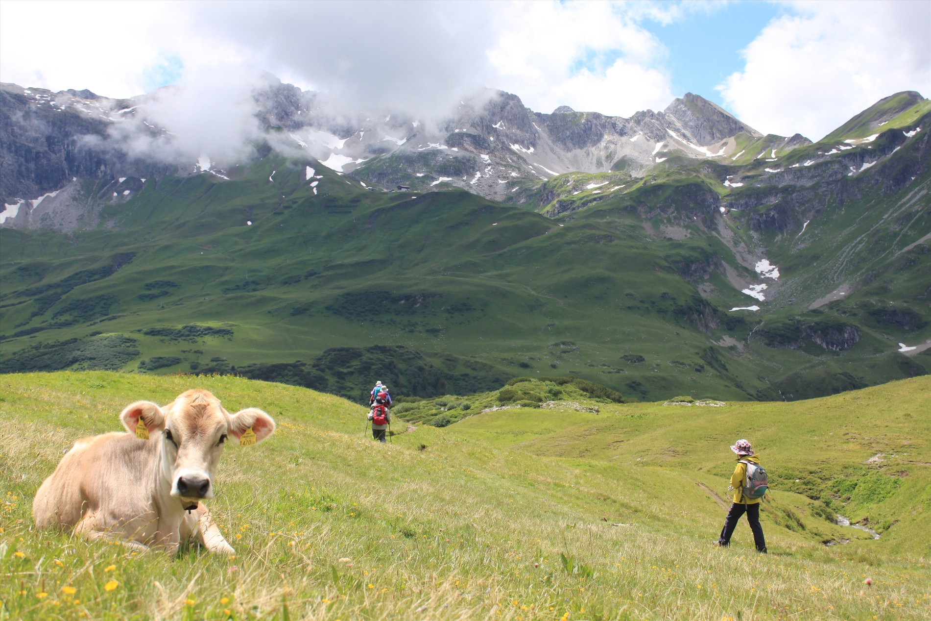 7月1日出発「花咲くチロル・アルプス・フラワー・ハイキングと美しき村 9日間」