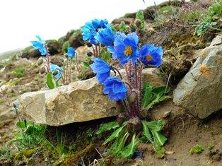 7月28日出発「チベット高原大周遊と青蔵鉄道の旅 10日間」