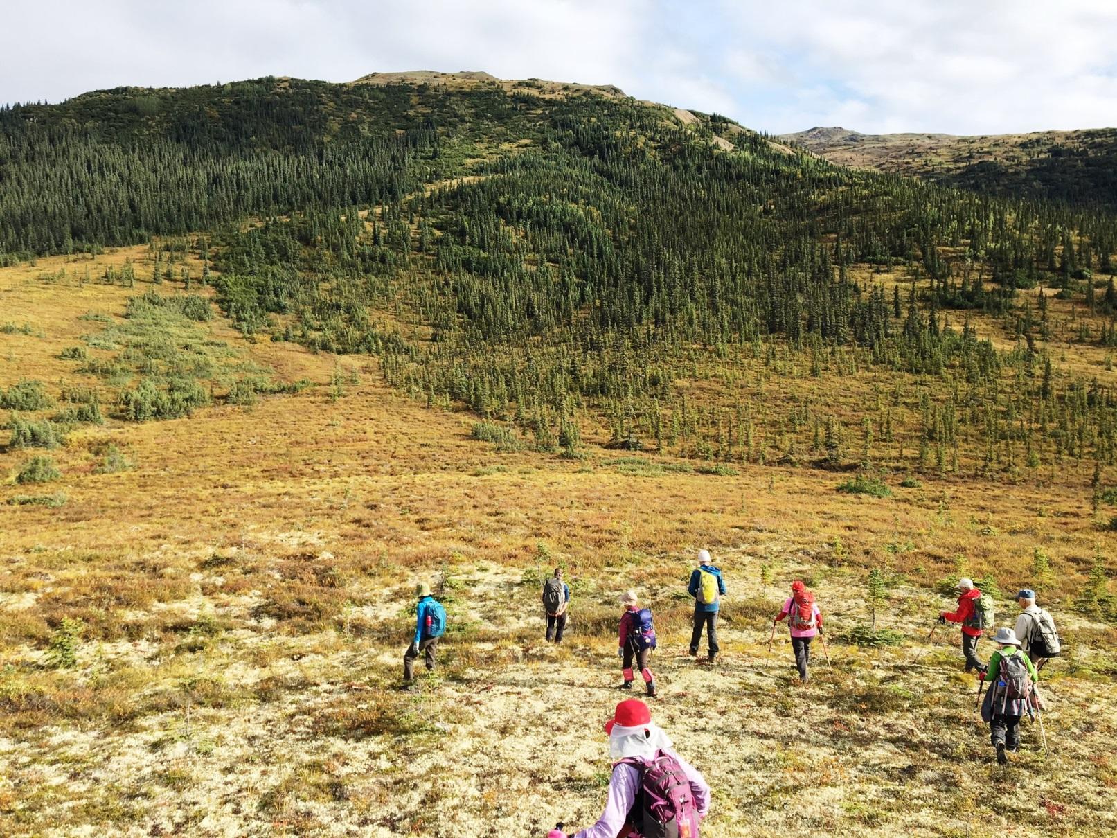 8月24日出発「デナリ国立公園最深部 キャンプ・デナリ滞在と氷河クルーズ 8日間」