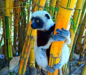 9月1日出発「インド洋の楽園マダガスカル ツインギー・トレッキングとペリネ保護区 11日間」