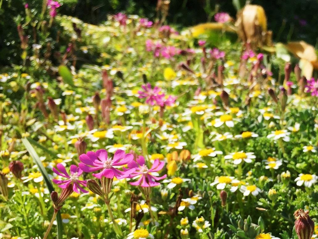 足元に広がる彩り豊かな春の花たち
