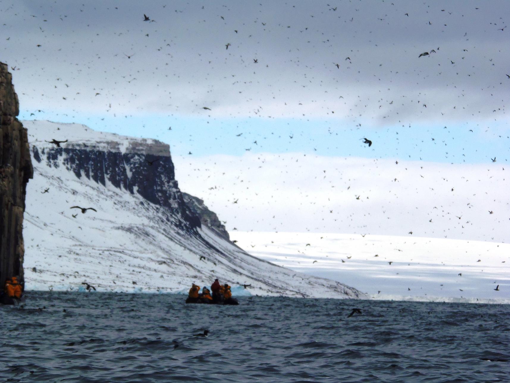 何十万羽もの海鳥が飛び交う