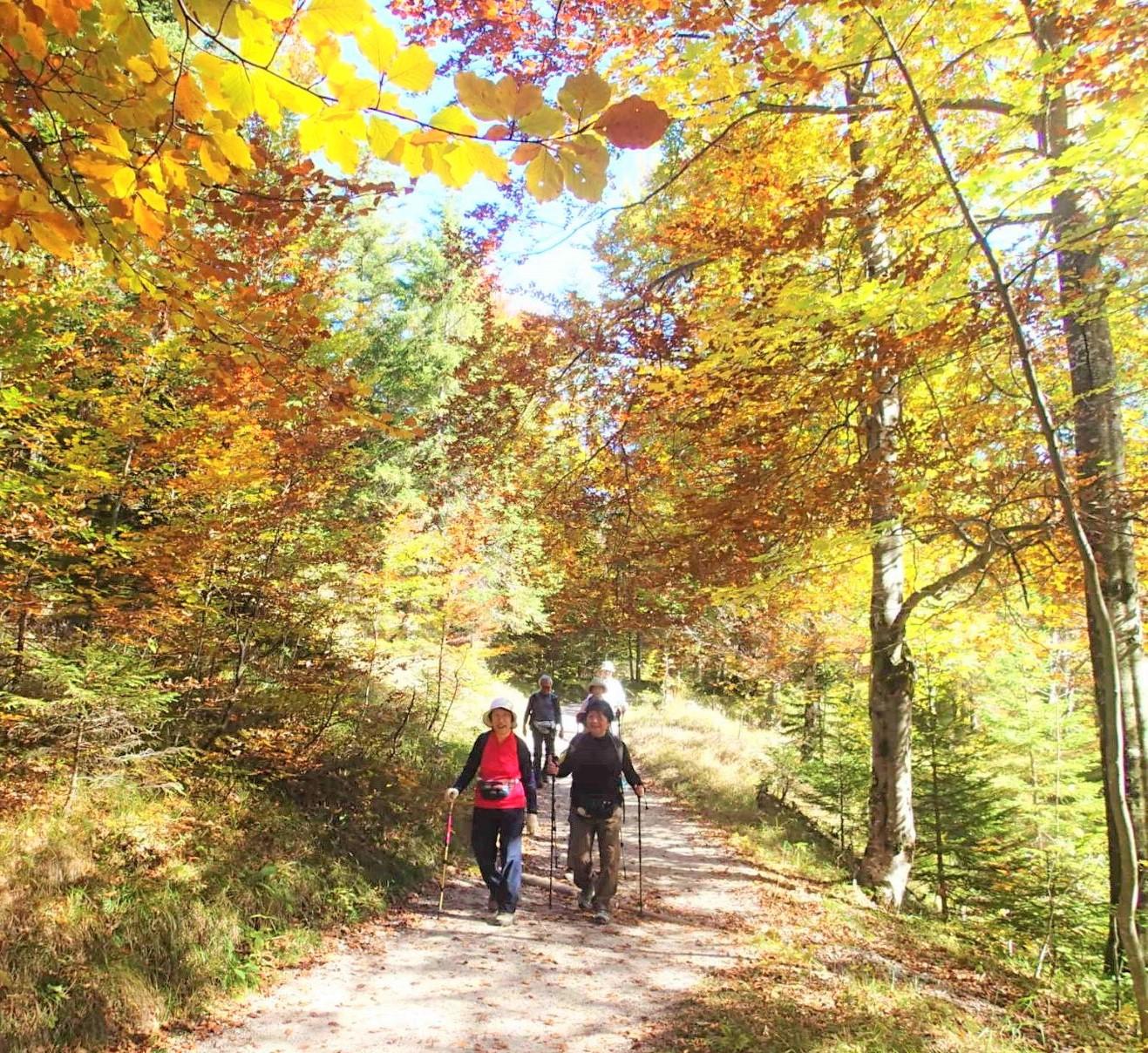 10月6日出発「ドイツ・バイエルン・アルプス・ハイキングと 歩いて楽しむロマンチック街道 8日間」