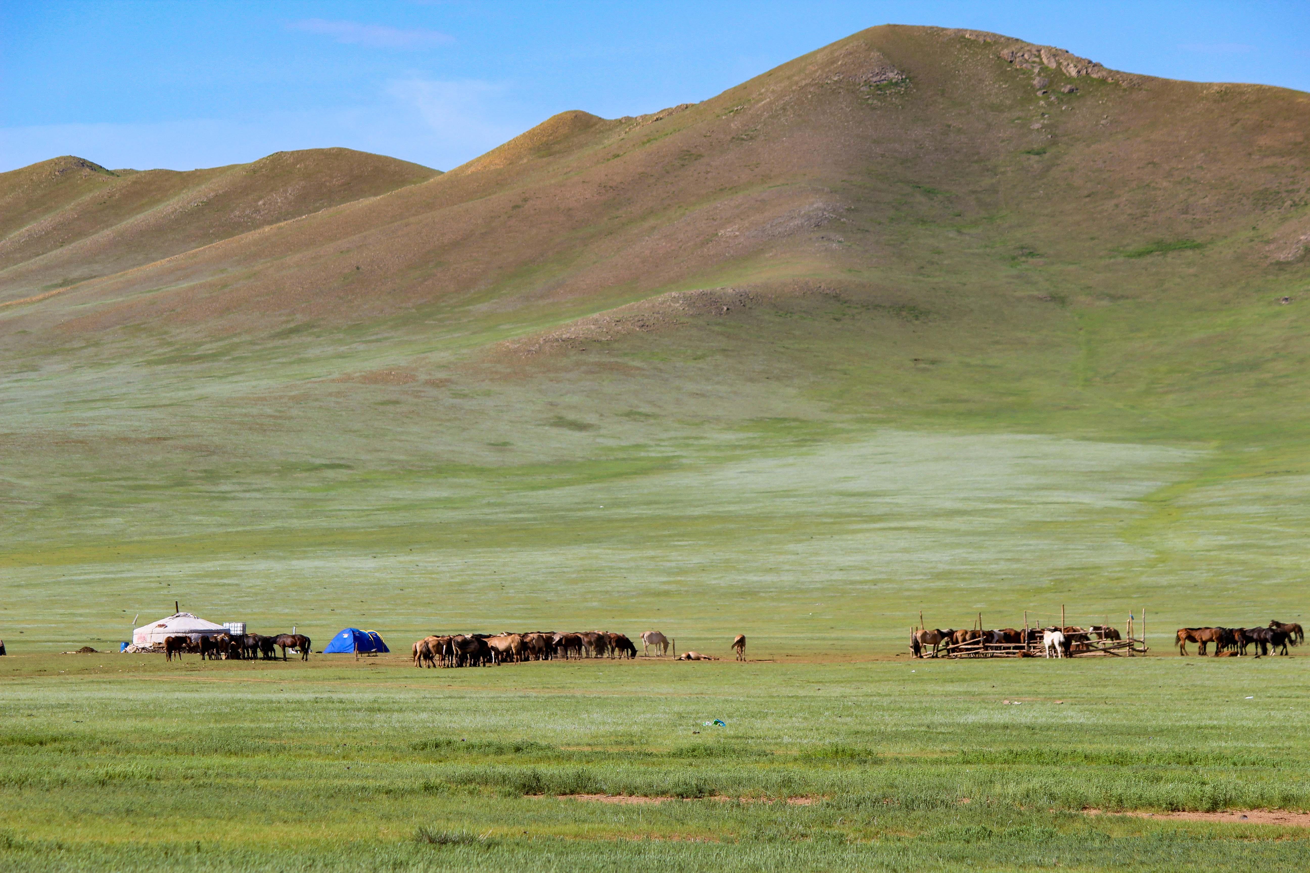 果てしなく広がる草原で遊牧生活を送る