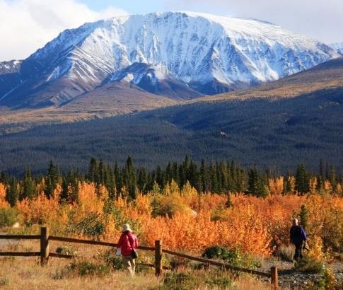 ▲滞在型で楽しむユーコン準州の黄葉と新雪