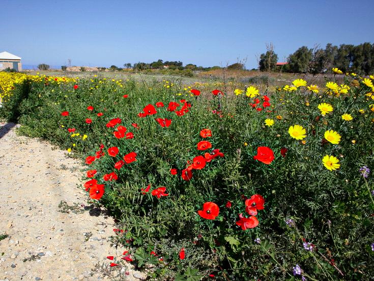 色とりどりの花が咲く島内
