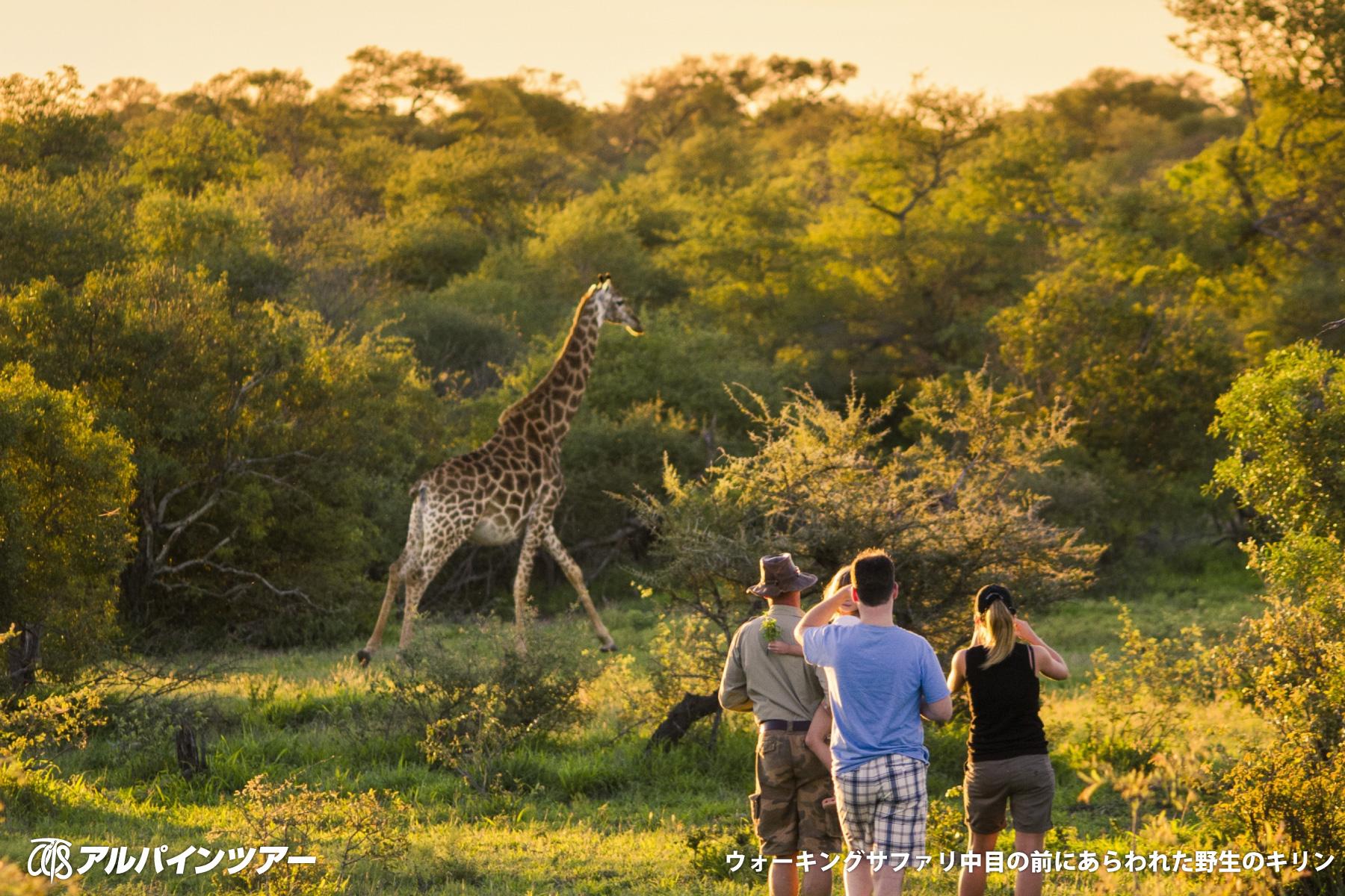 【エリア紹介】 野生動物の楽園クルーガー国立公園(南アフリカ)