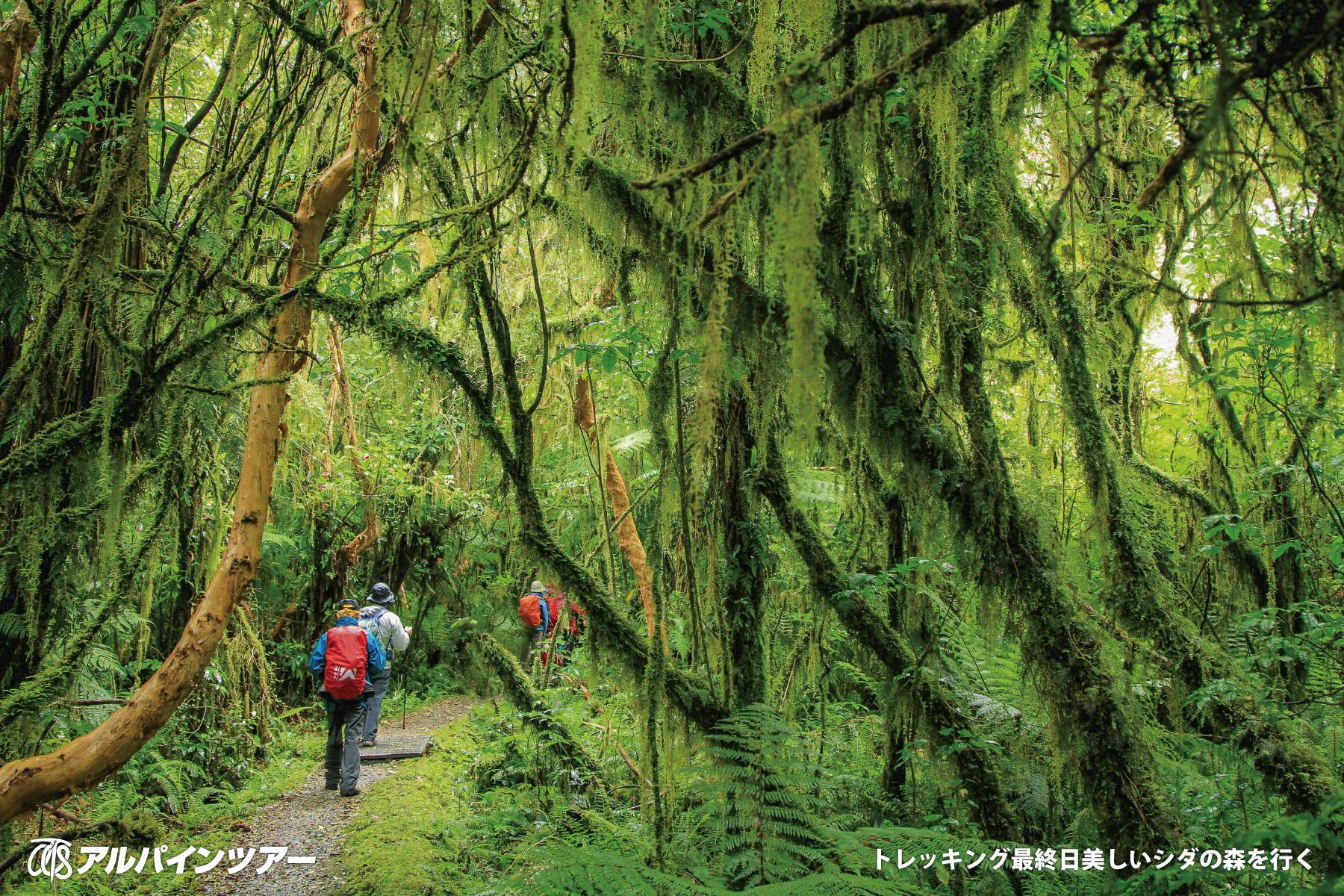 【エリア紹介】 美しい緑の森と圏谷を歩くミルフォード・トラック