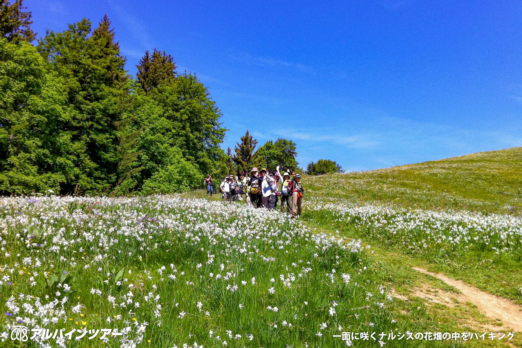 【今日の花】 ナルシス(スイス)