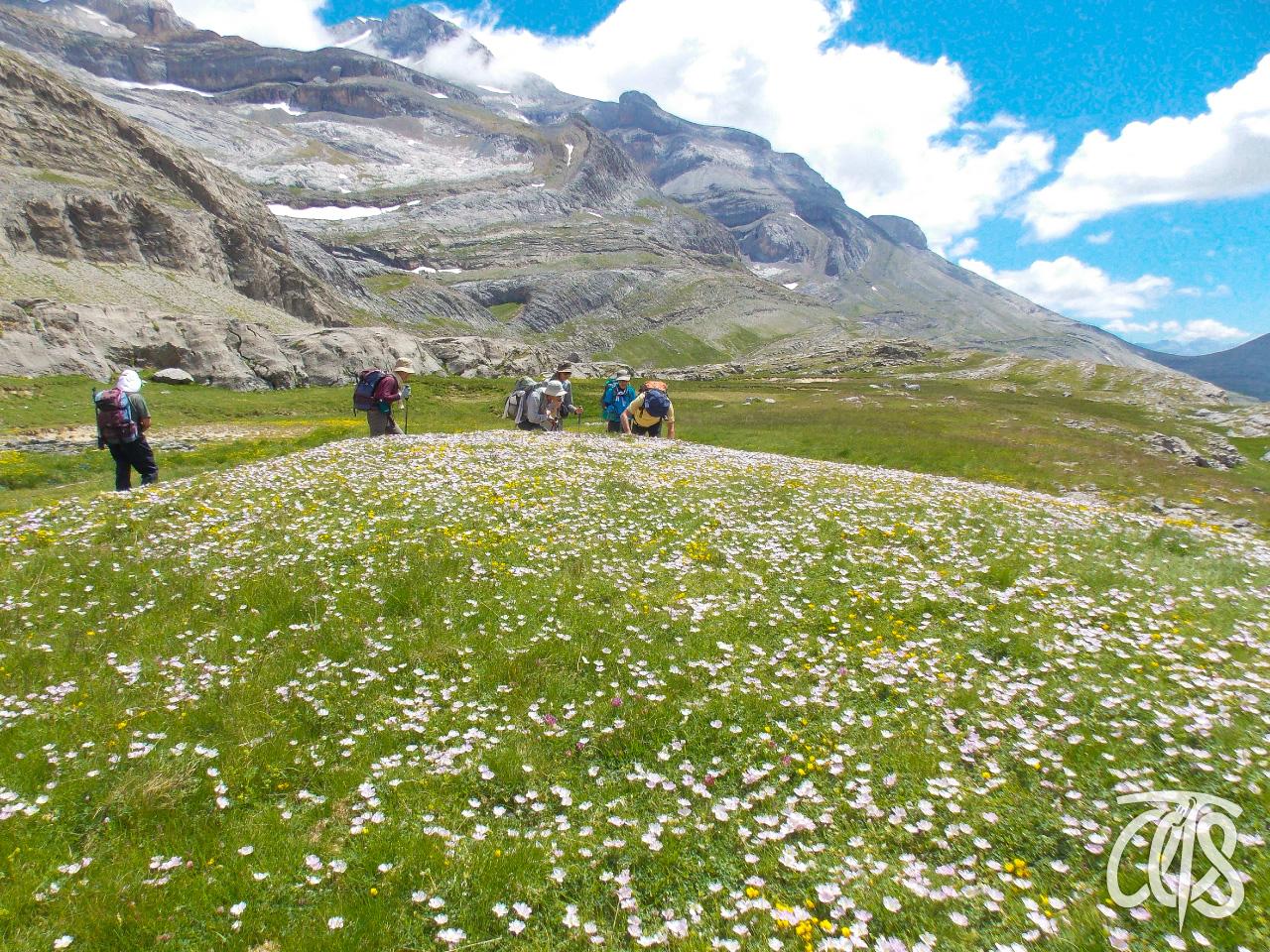一面に咲く花畑の中ハイキング