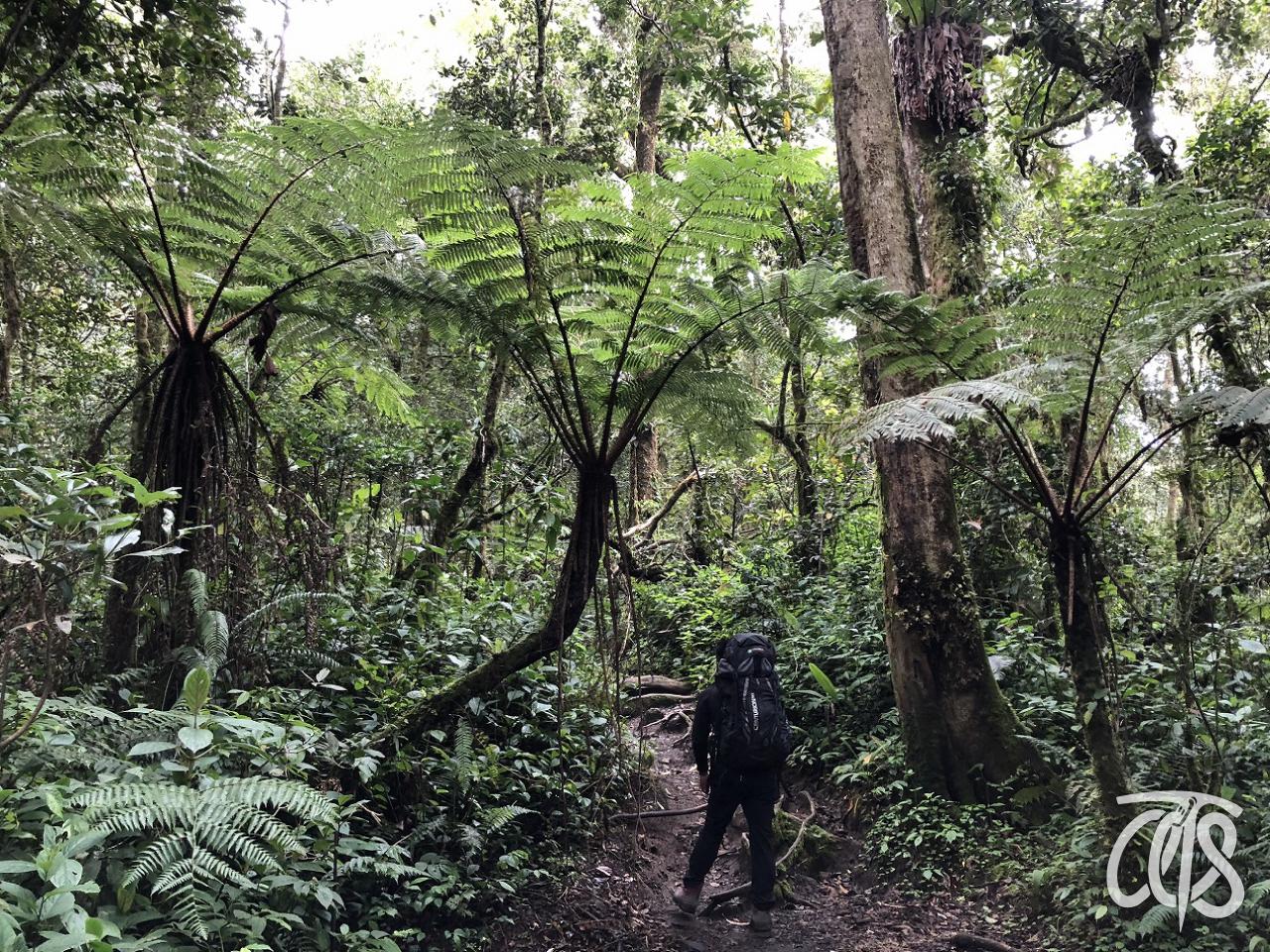 植生豊かな熱帯雨林を歩く