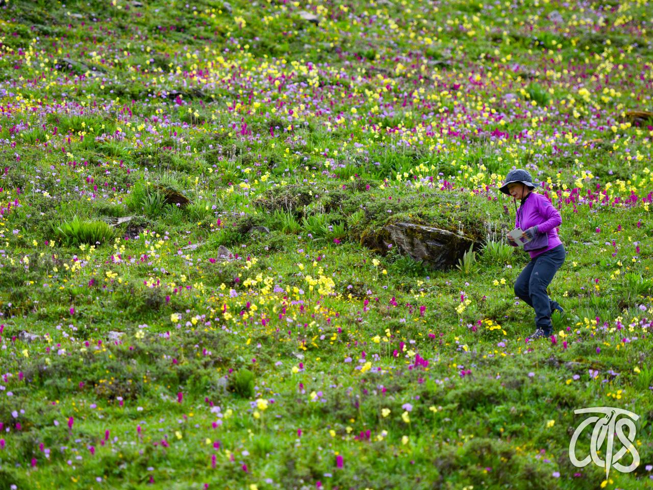 山麓は足の踏み場が無いほどのお花畑