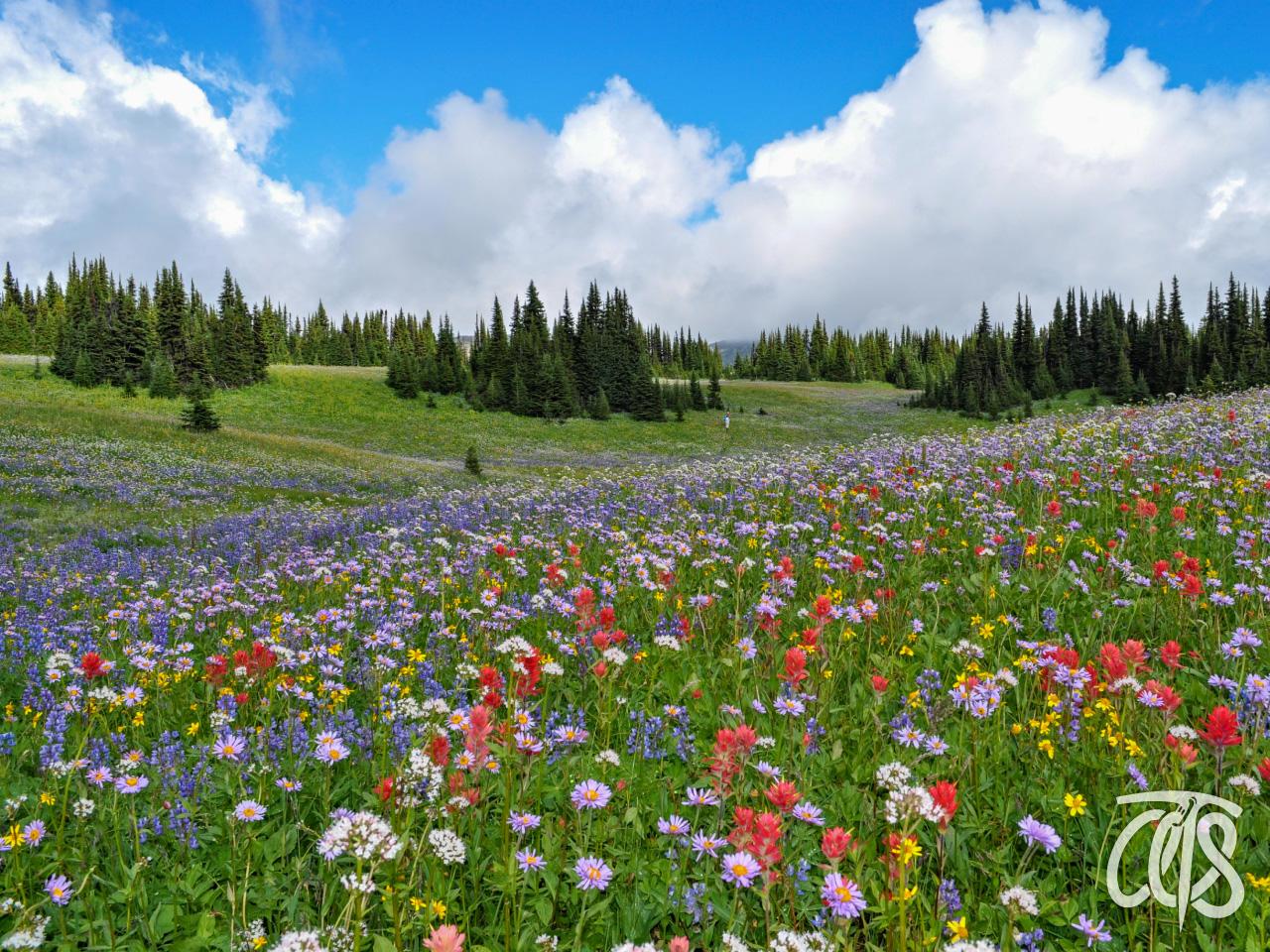 一面に咲く高山植物