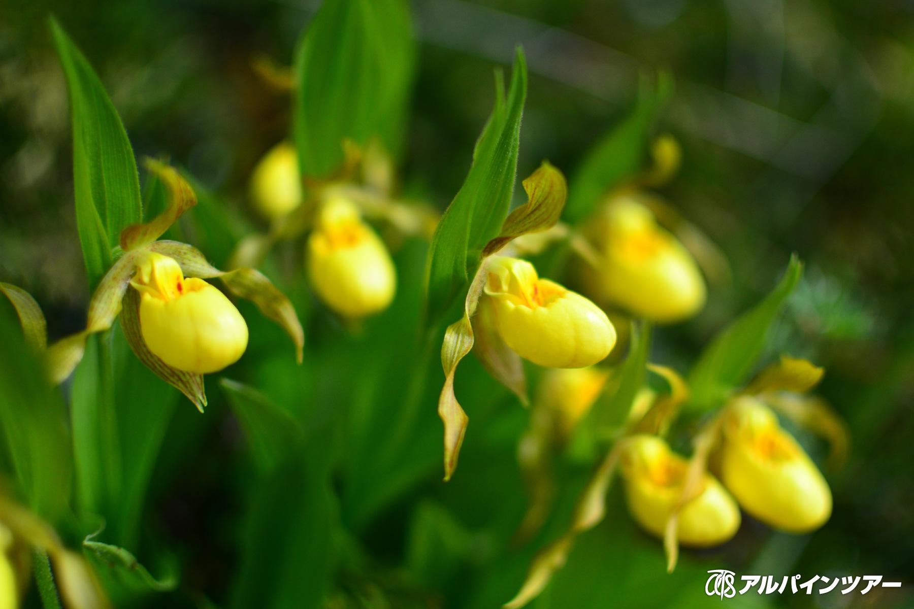 【今日の花】 イエロー レディース スリッパー