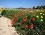 <高橋修さん同行> 花のキプロス島フラワー・ハイキングと世界遺産探訪