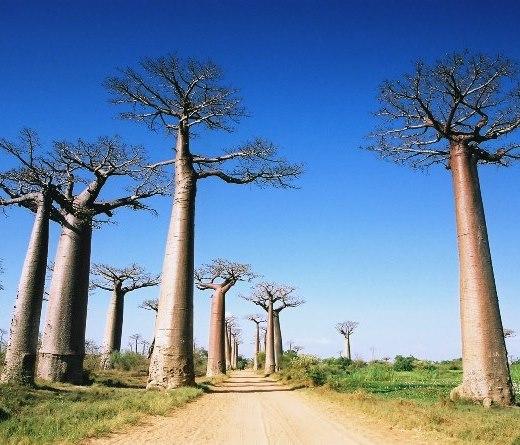 9月23日、10月28日出発 インド洋の楽園マダガスカル、世界遺産 ツインギー・トレッキングと2つの保護区 12日間