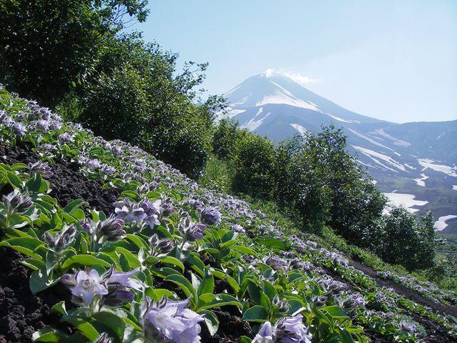 カムチャッカ半島フラワー・ハイキングと世界遺産の火山群展望 5日間