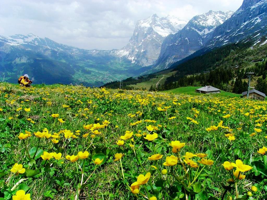 【新設定/GW特別企画】4月27日出発 迫力のマッターホルン山岳フライトと花のスイス・アルプス 9日間