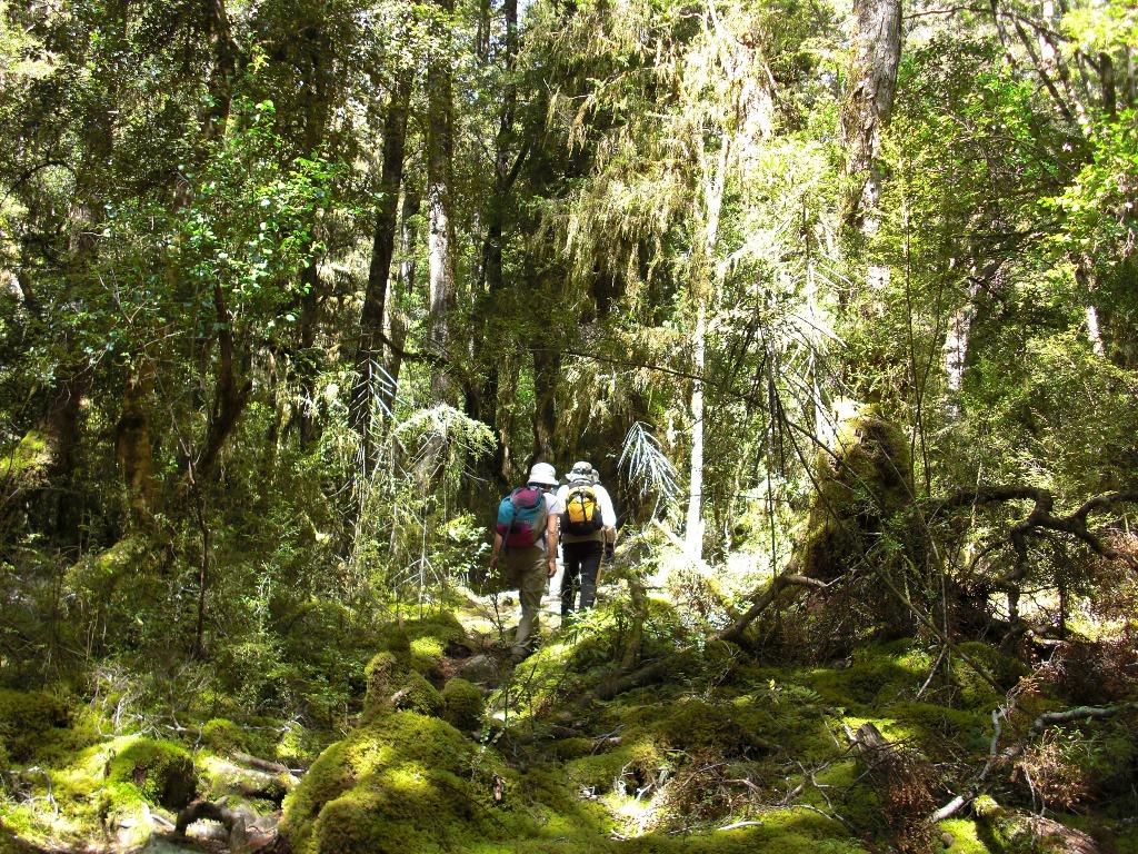 ミルフォード&ルートバーン1日ハイキングとNZ最高峰アオラキ/マウントクック展望 8日間