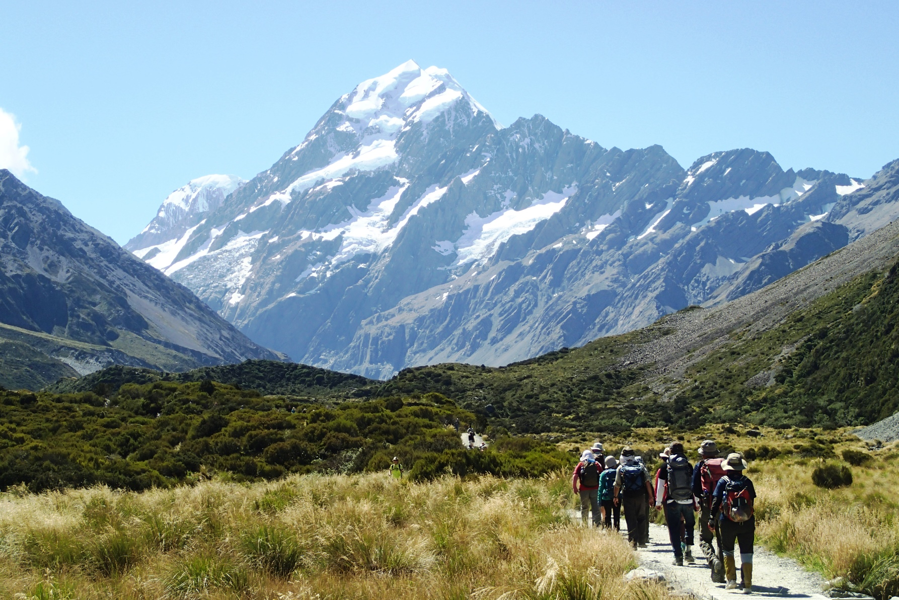 ニュージーランド南島フラワーハイキング 8日間