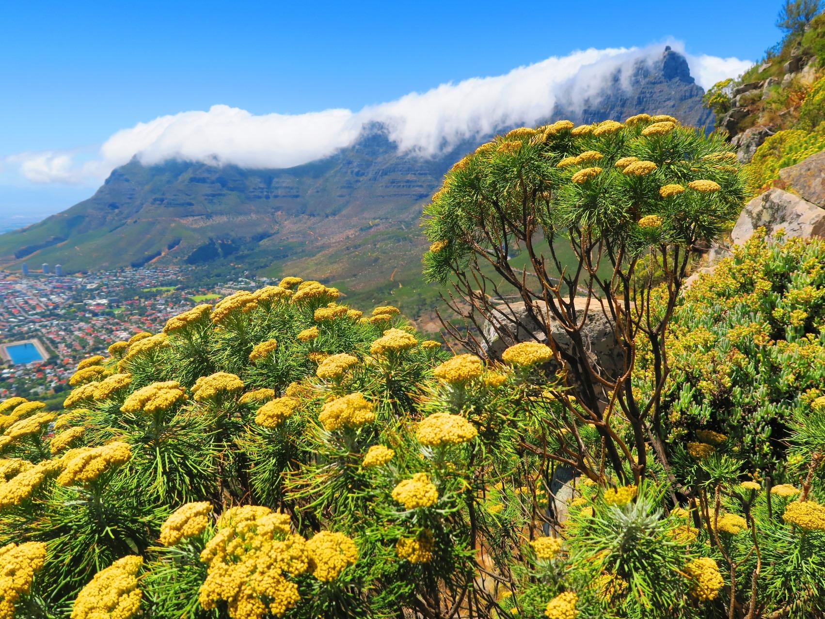 南アフリカ ケープ半島 フラワー・ハイキング 8日間