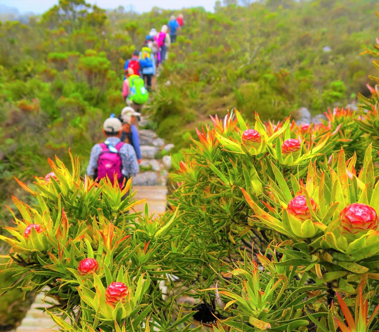 【催行予定・残席僅か】11月26日出発【髙橋修さん同行】ナミビア&南アフリカ 不思議植物の探訪とケープ半島フラワー・ハイキング 9日間