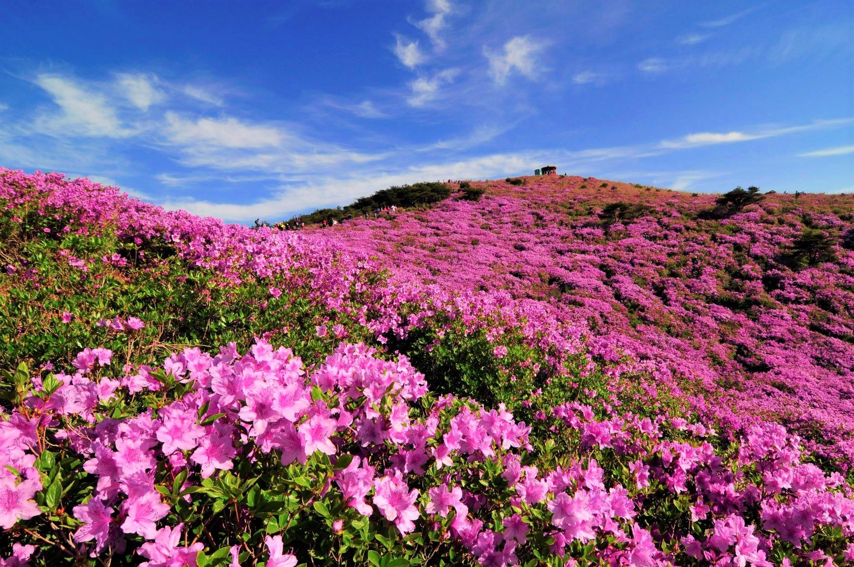 韓国2座登頂智異山とツツジ咲く黄梅山 5日間
