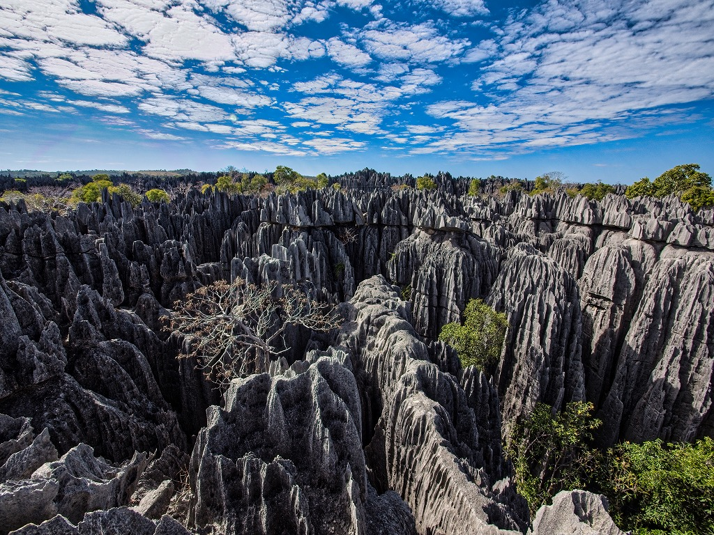 インド洋の楽園マダガスカル ツインギー・トレッキングとペリネ保護区 12日間