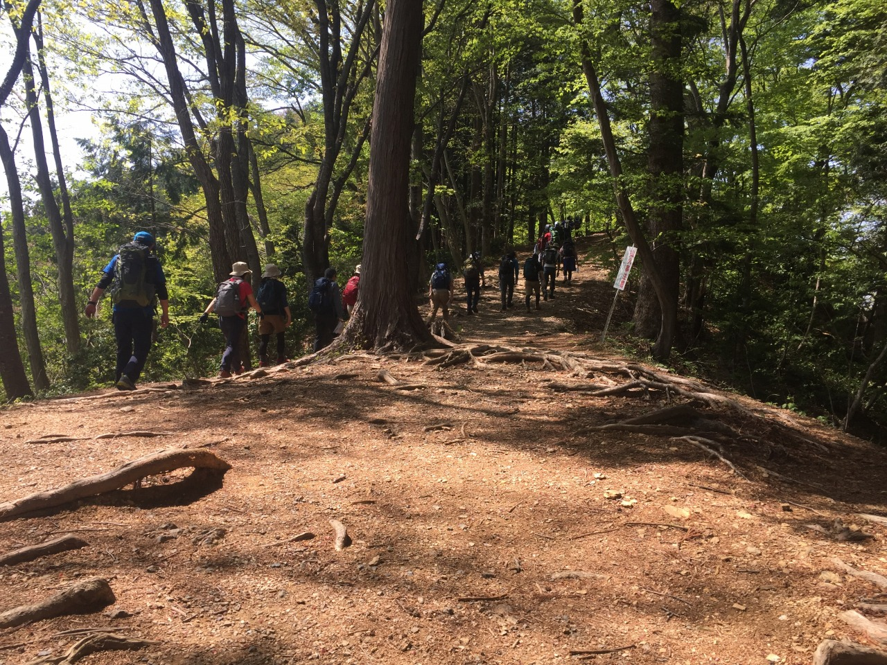山の歩行力入門⑥ 登板姿勢 丸山・笹尾根から槇寄山 日帰り