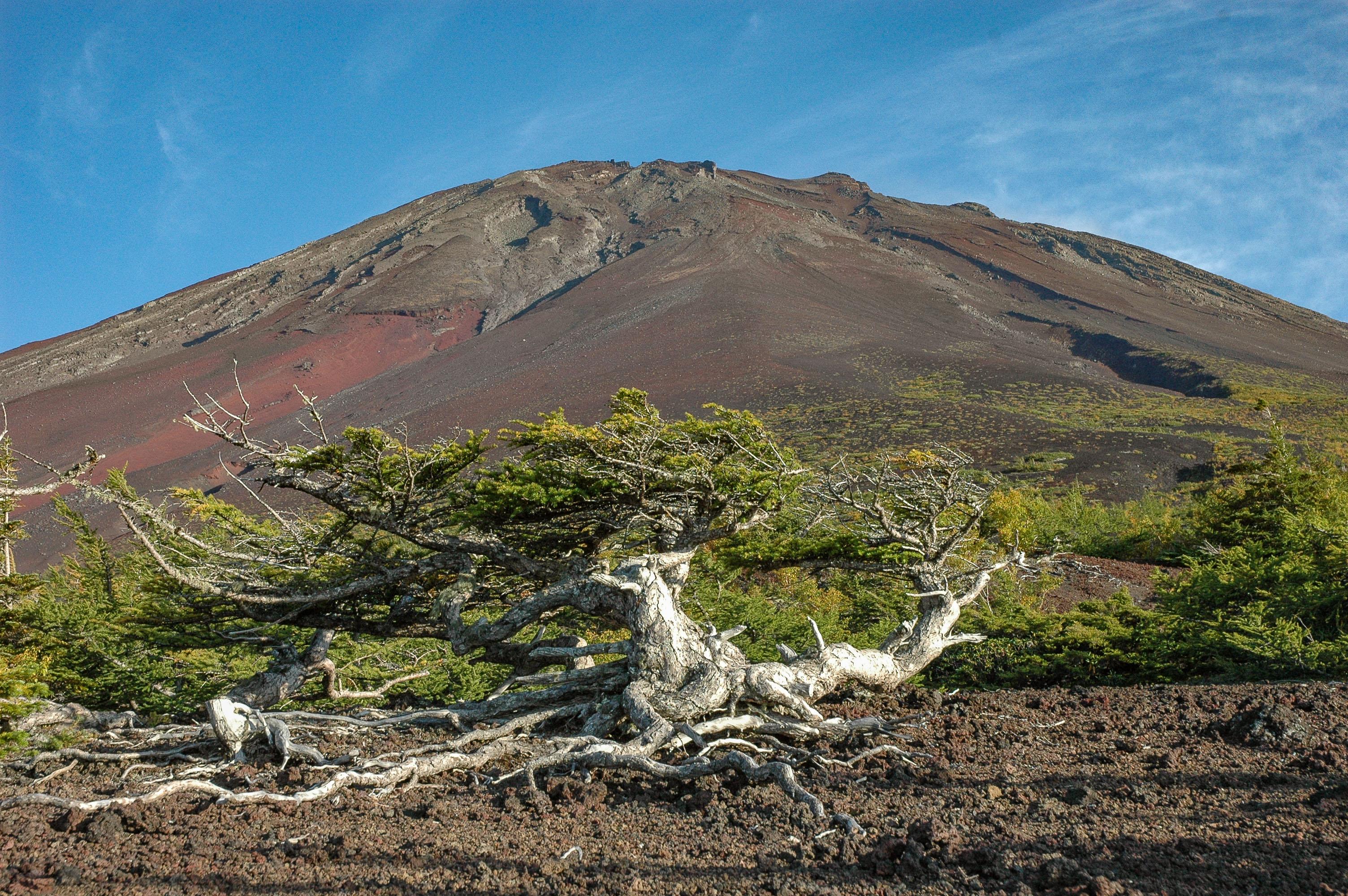 一人部屋利用、バスもゆったり 富士・奥庭と三国山ハイキング 2日間