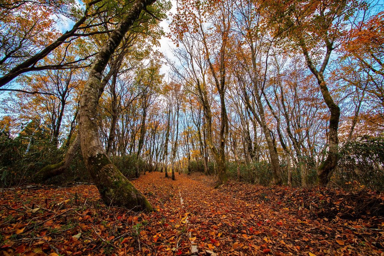 【2つの温泉宿に宿泊】 秋色に染まる 高清水トレイルとみつばち農園見学 3日間