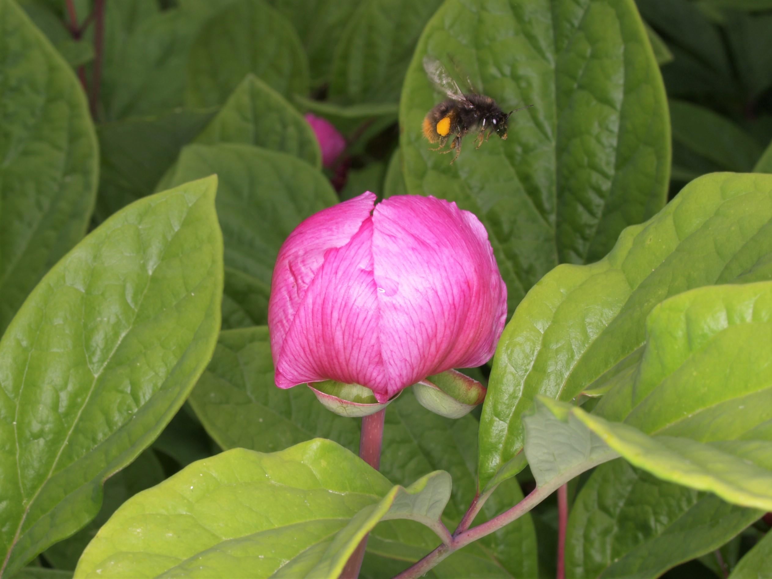 【花の観察会】 宮城 金華山と仙台海岸の植物を訪ねる 2日間