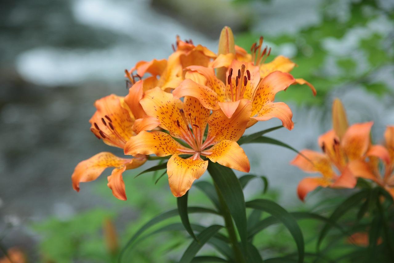 【花の観察会】 根室半島 最果ての植物を訪ねる 3日間