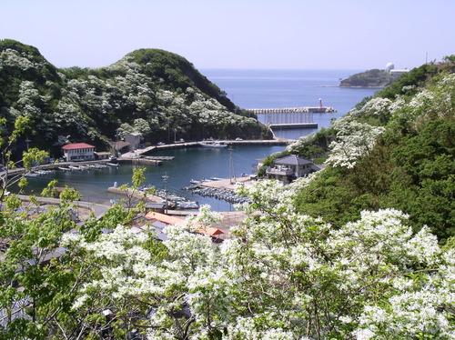 【福岡発着】日本最大規模のヒトツバタゴ咲く国境の島・対馬大周遊ハイキングと歴史探訪 7日間