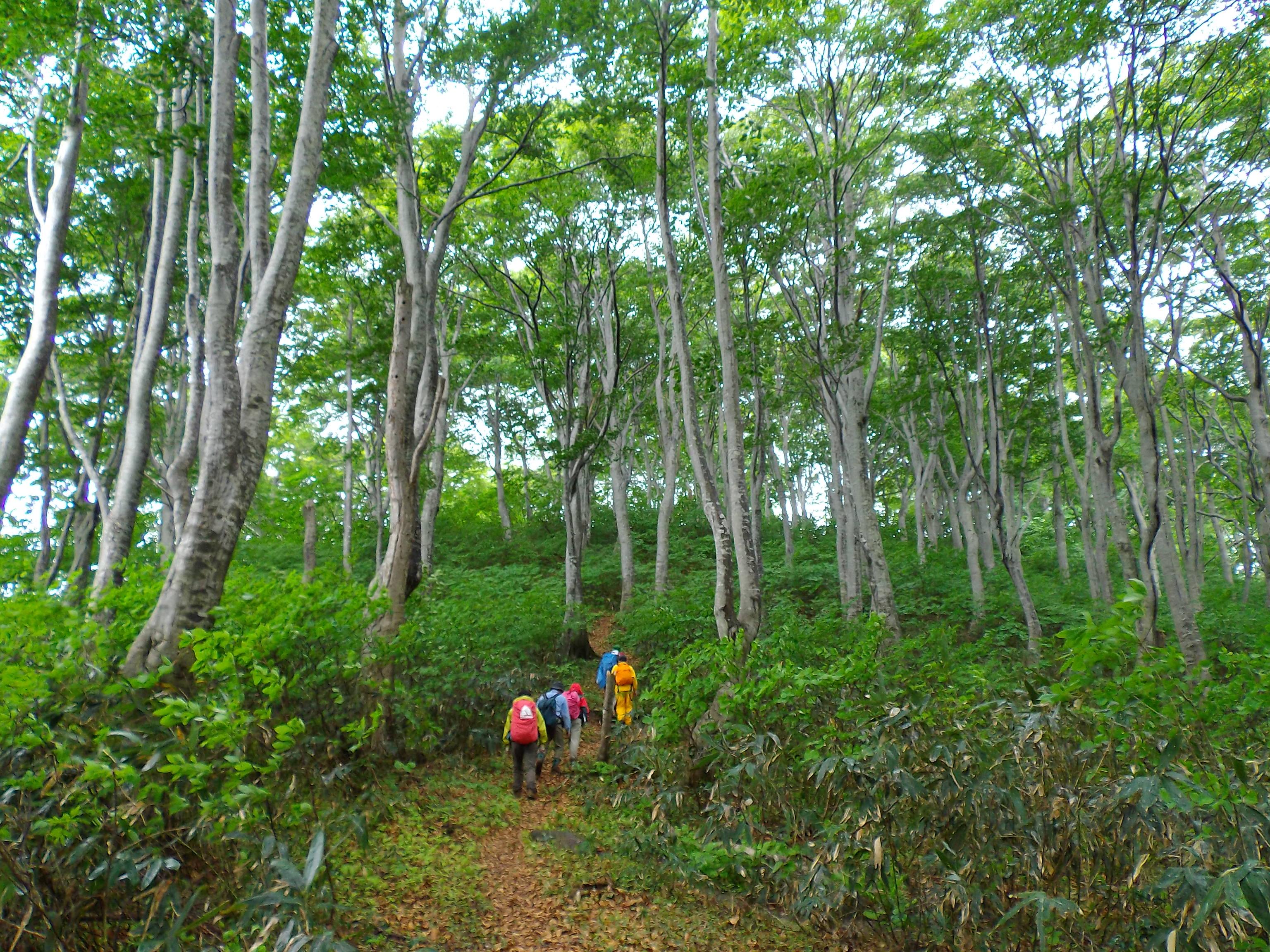 ブナ林が特に美しい後半3セクション<br> 信越トレイル(セクション6~4)3日間