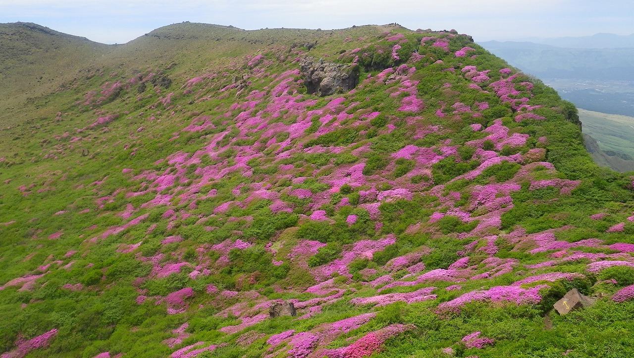 花の九重山と阿蘇山 3日間